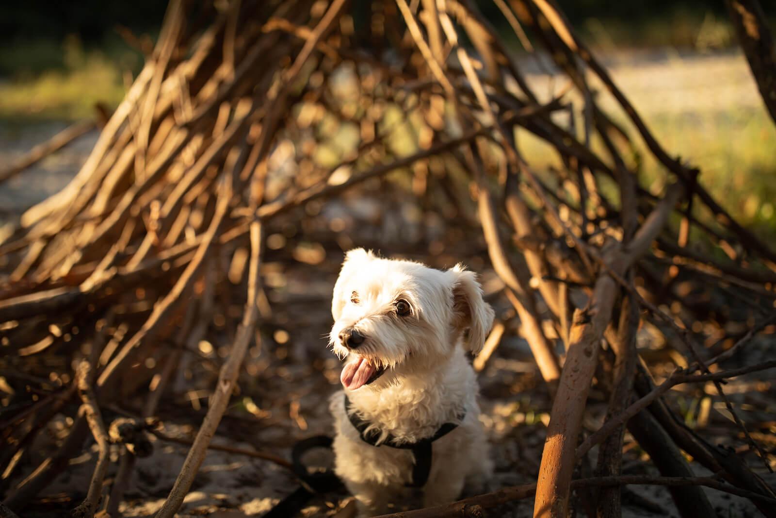 Dog day care eastern suburbs Sydney